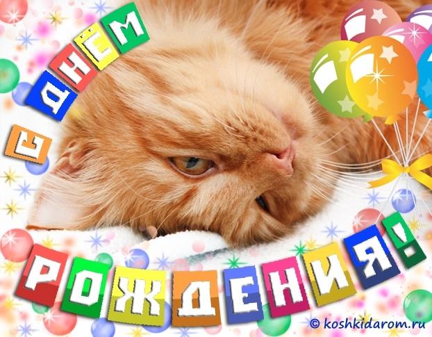 Нажмите на изображение для увеличения.  Название:Картинки-с-кошками-с-днем-рождения004.jpg Просмотров:0 Размер:54.8 Кб ID:8995