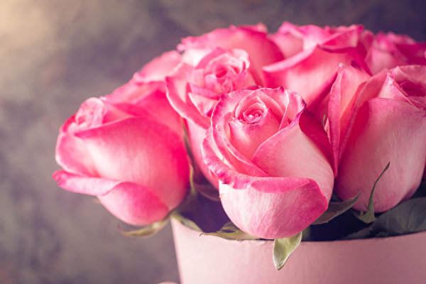 Нажмите на изображение для увеличения.  Название:Roses_Closeup_Pink_color_552274_600x400.jpg Просмотров:10 Размер:47.4 Кб ID:8380